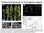 enhanced growth in transgenic aspen