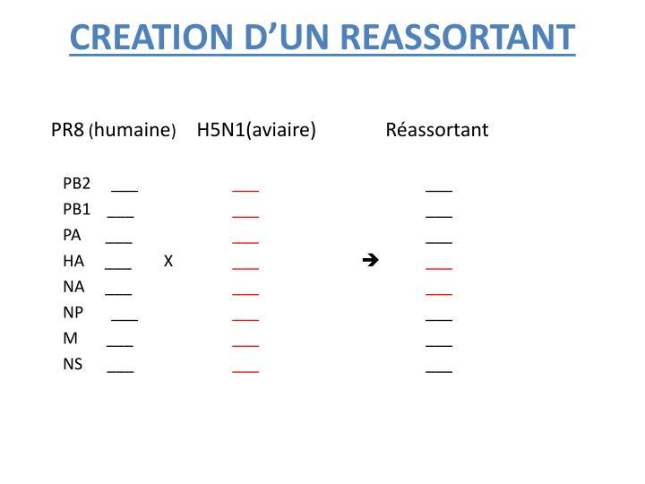 CREATION D'UN REASSORTANT