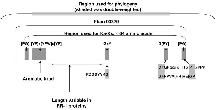 Region used for phylogeny (shaded was double-weighted)