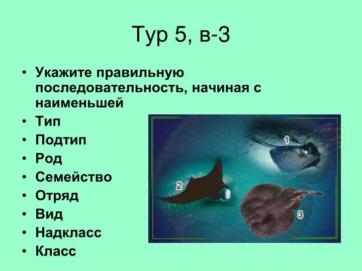 Тур 5, в-3