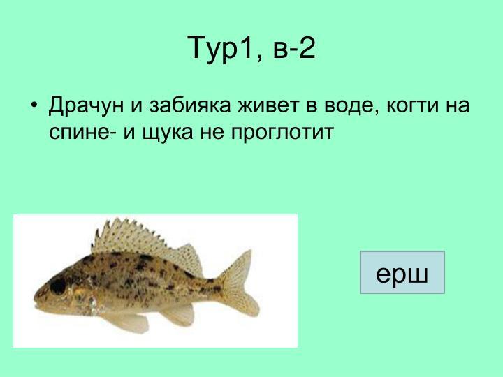 Тур1, в-2