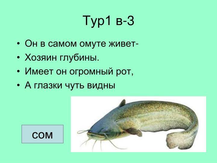 Тур1 в-3