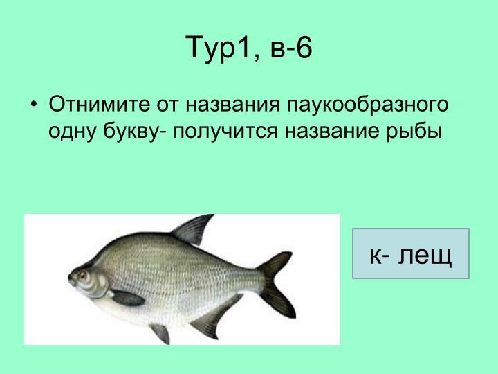 Тур1, в-6