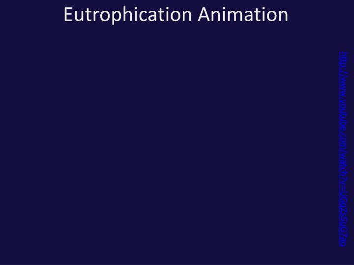 Eutrophication Animation