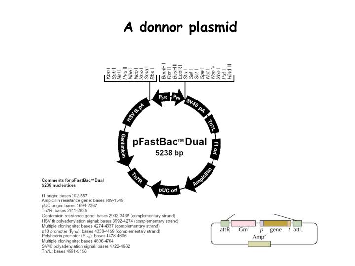 A donnor plasmid