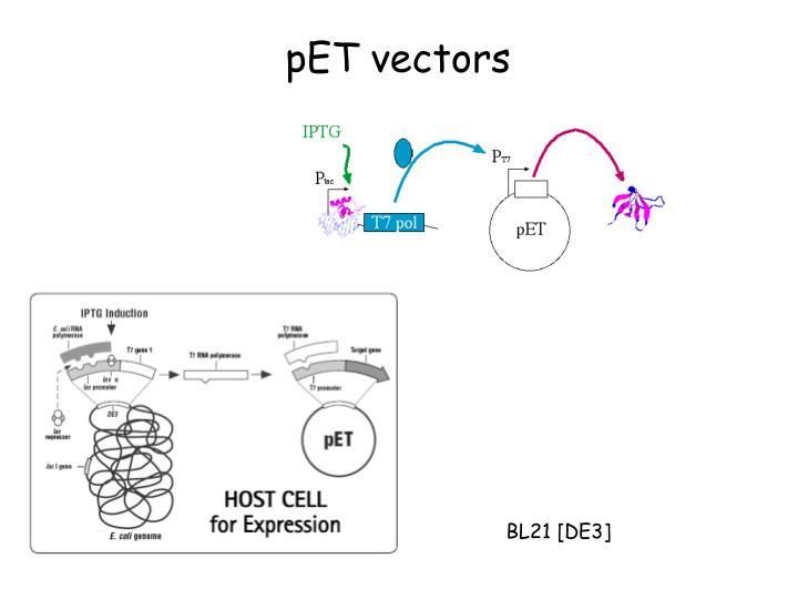 pET vectors