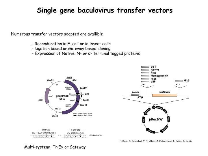 Single gene baculovirus transfer vectors