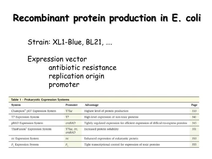 Recombinant protein production in E. coli