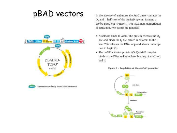 pBAD vectors