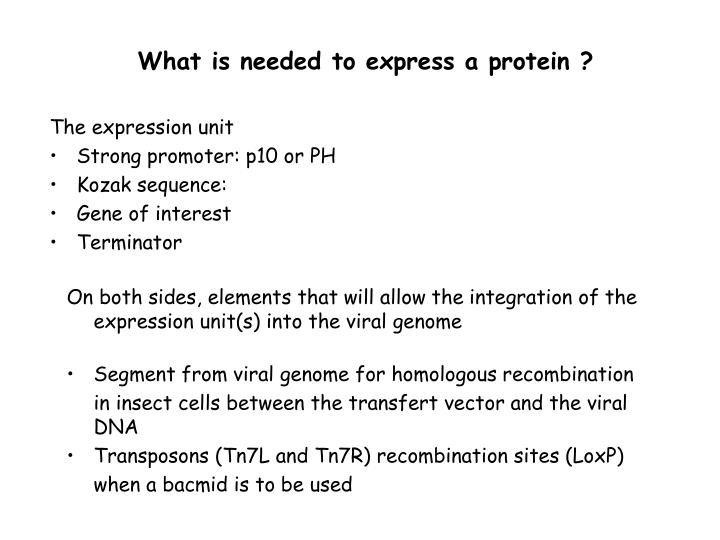 What is needed to express a protein ?