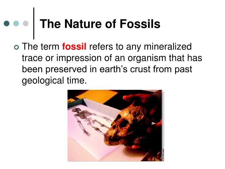 The Nature of Fossils