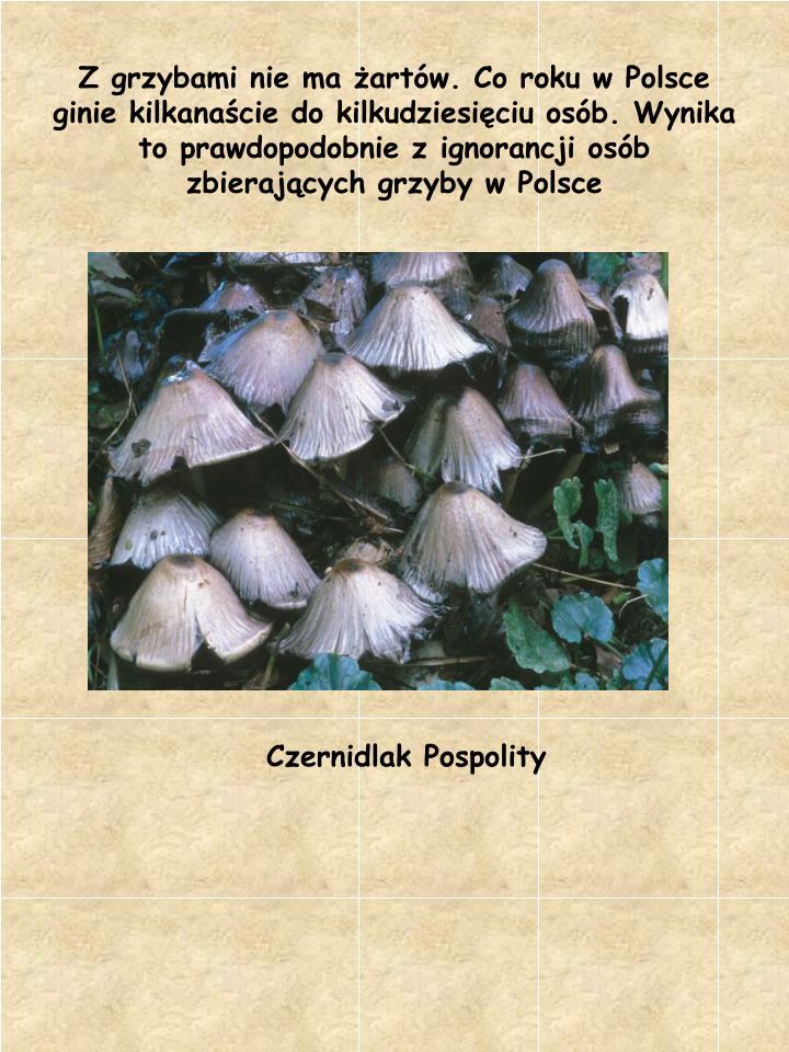 Z grzybami nie ma żartów. Co roku w Polsce ginie kilkanaście do kilkudziesięciu osób. Wynika to...