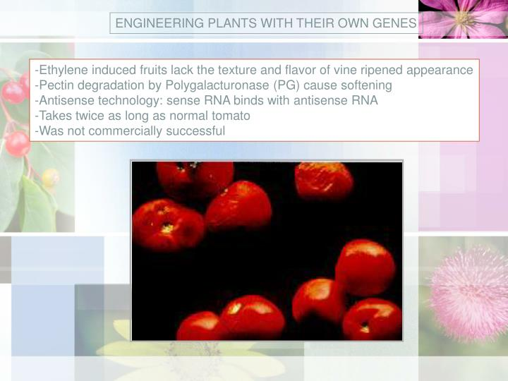ENGINEERING PLANTS WITH THEIR OWN GENES