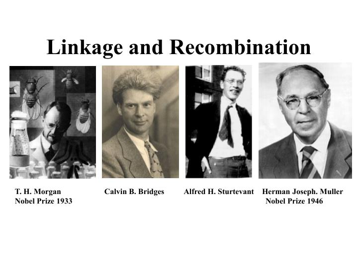 Linkage and recombination