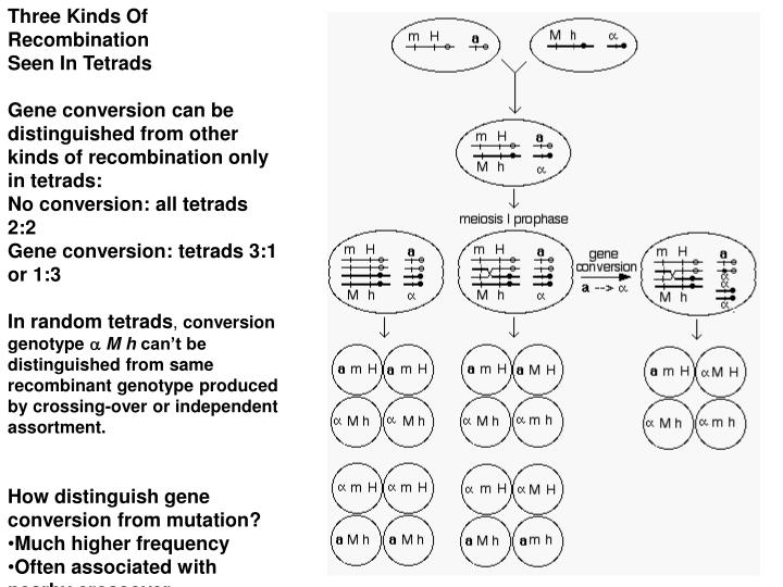Three Kinds Of Recombination