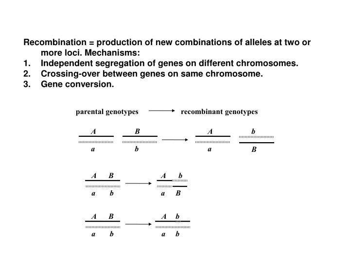 Recombination = production of new combinations of alleles at two or more loci. Mechanisms: