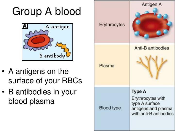 Group A blood