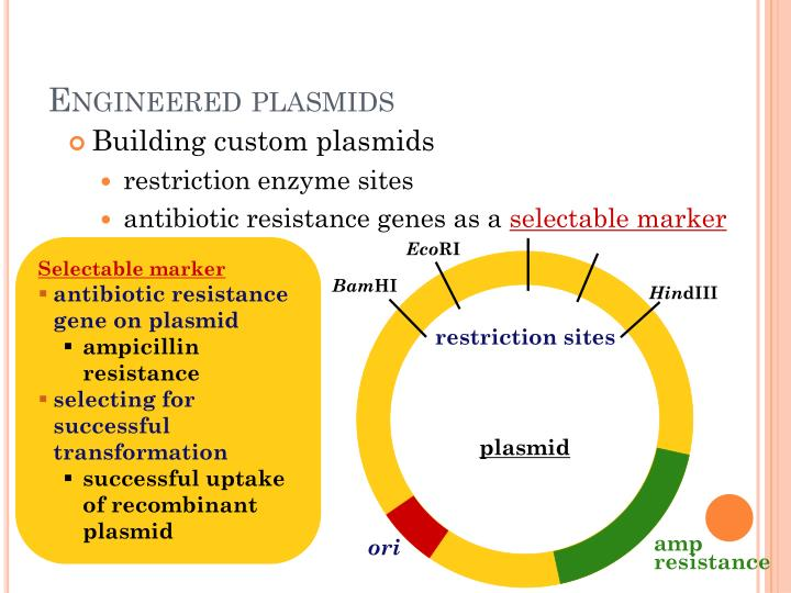 Engineered plasmids