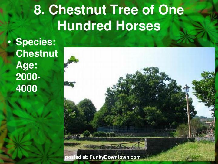 8. Chestnut Tree of One Hundred Horses