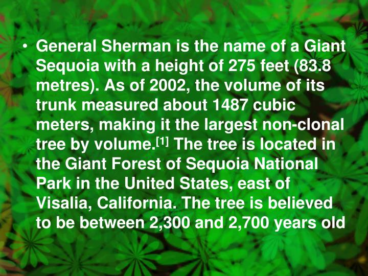 General Sherman is the name of a Giant Sequoia with a height of 275 feet (83.8 metres). As of 2002, the volume of its trunk measured about 1487 cubic meters, making it the largest non-clonal tree by volume.
