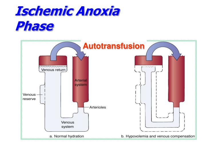 Ischemic Anoxia Phase