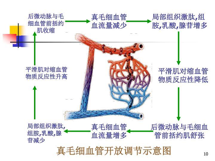 真毛细血管开放调节示意图