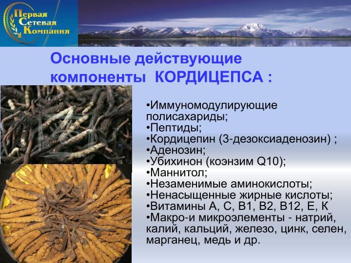 Основные действующие компоненты  КОРДИЦЕПСА :
