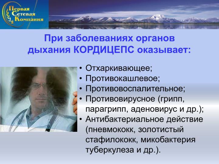При заболеваниях органов            дыхания КОРДИЦЕПС оказывает: