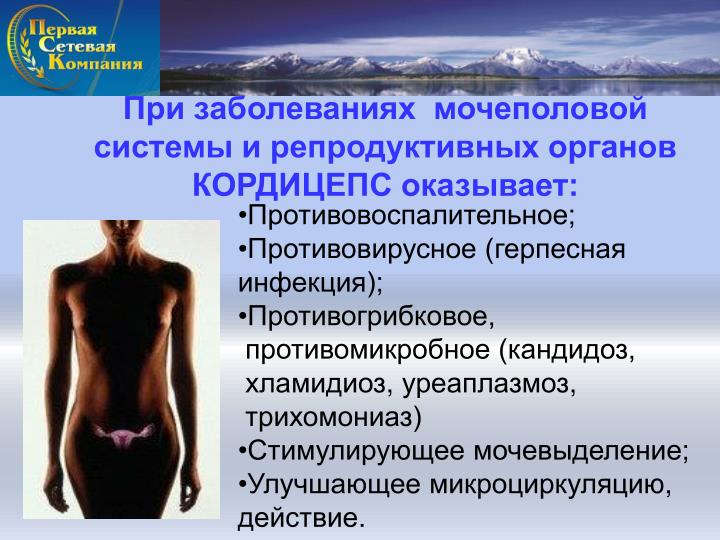 При заболеваниях  мочеполовой системы и репродуктивных органов КОРДИЦЕПС оказывает:
