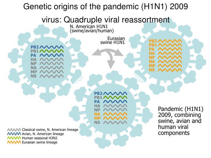 Genetic origins of the pandemic h1n1 2009 virus quadruple viral reassortment