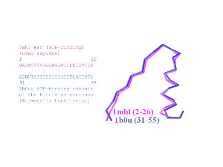 1mh1 Rac (GTP-binding)