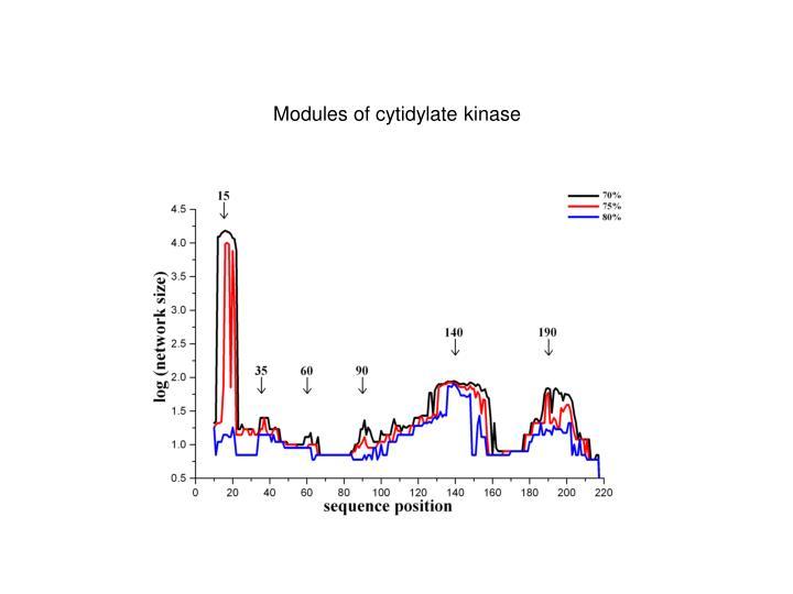 Modules of cytidylate kinase