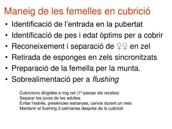 Maneig de les femelles en cubrició