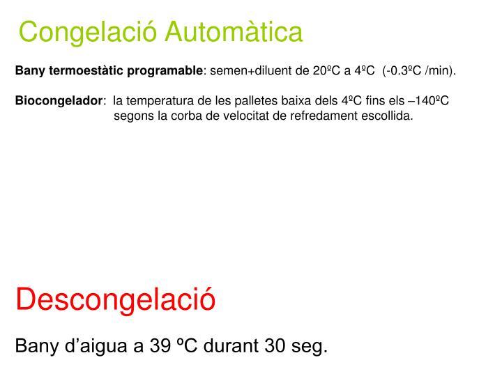Congelació Automàtica