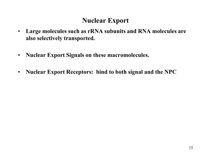 Nuclear Export