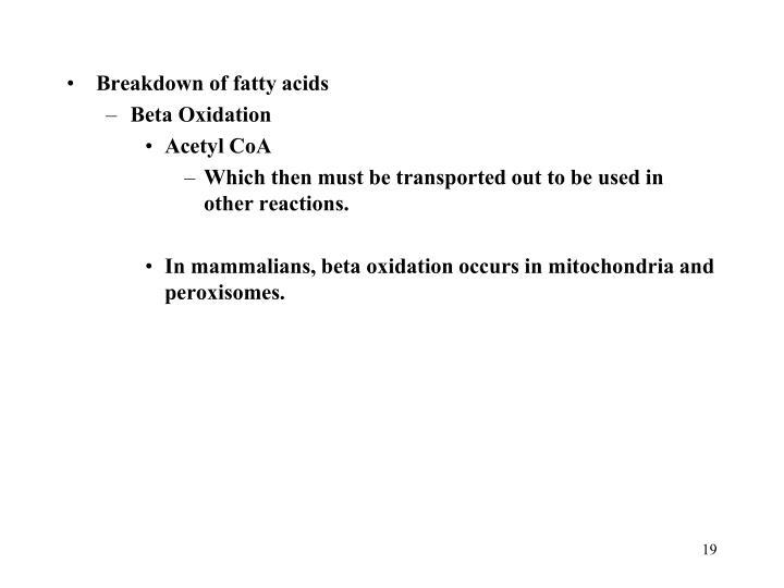 Breakdown of fatty acids