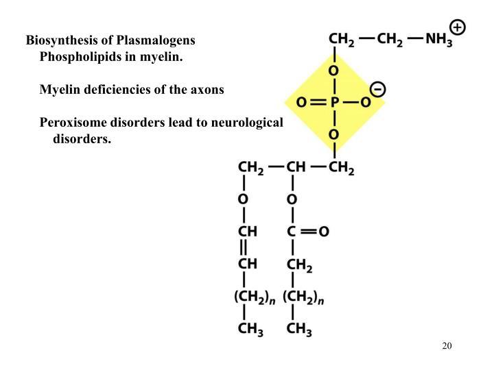 Biosynthesis of Plasmalogens