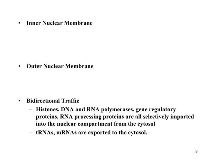 Inner Nuclear Membrane