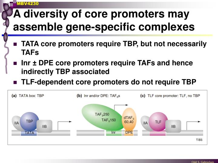 A diversity of core promoters may assemble gene-specific complexes