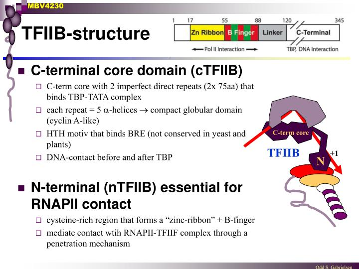 TFIIB-structure