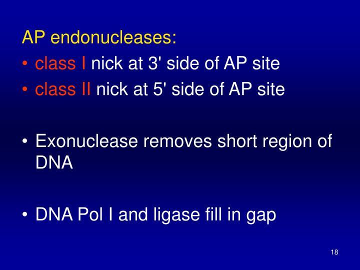 AP endonucleases: