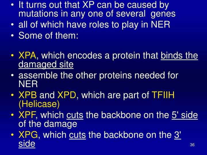 It turns out that XP can be caused by mutations in any one of several genes
