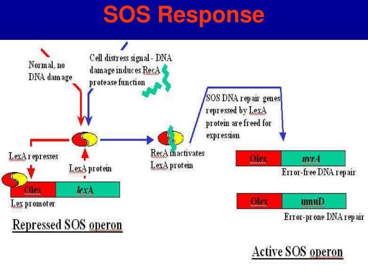 SOS Response