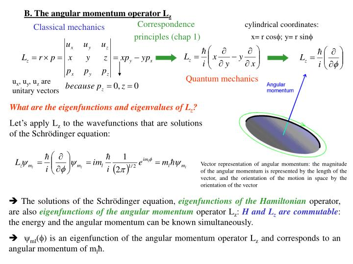 B. The angular momentum operator L
