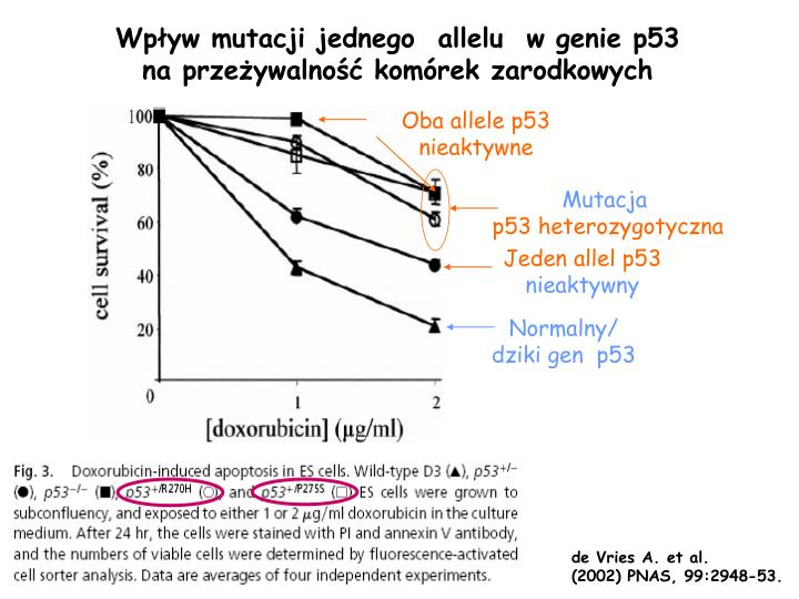Oba allele p53