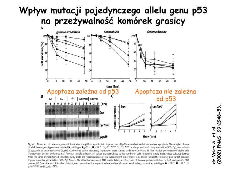 Wpływ mutacji pojedynczego allelu genu p53