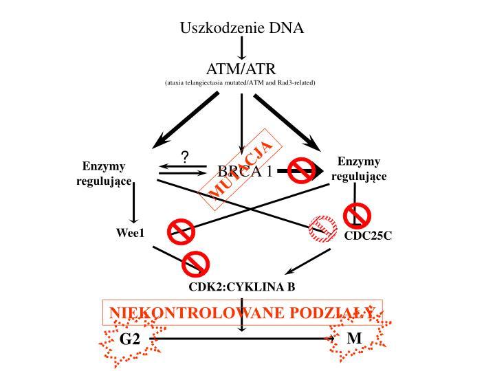 Uszkodzenie DNA