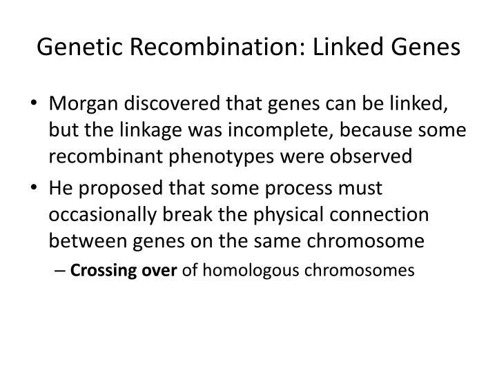 Genetic Recombination: Linked Genes