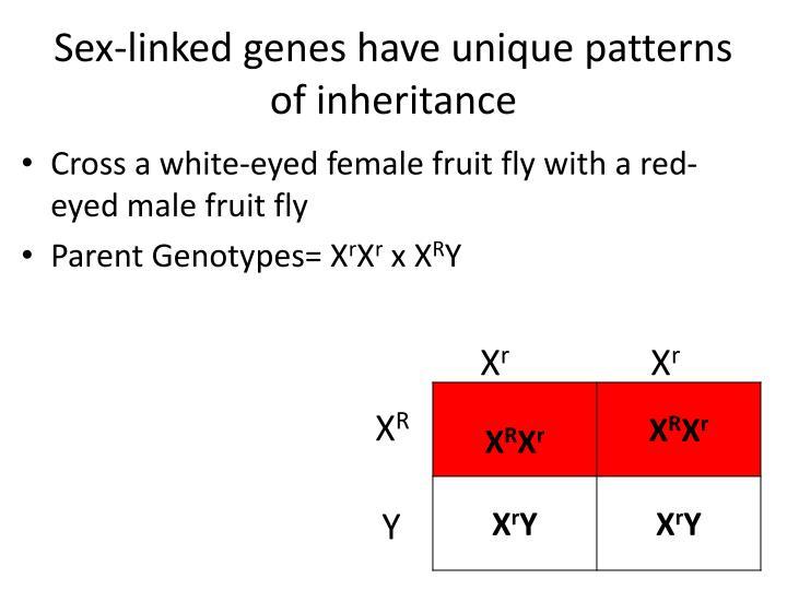 Sex-linked genes have unique patterns of inheritance