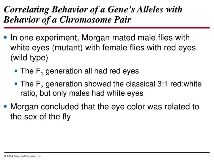 Correlating Behavior of a Gene's